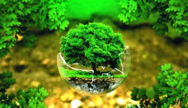 Villa Elbas anhållan om fortsatt Green Key -miljöcertifikat godkändes!